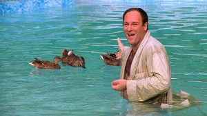 tony-and-the-ducks